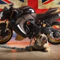CustomBikeBulldog-by-Vliner-TriumphSpeedTripple-013